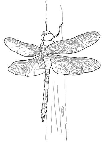 Green Darner Dragonfly coloring page from Dragonfly