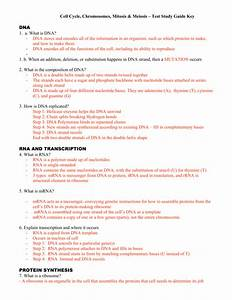 Study Guide Dna Rna And Protein Synthesis Worksheet