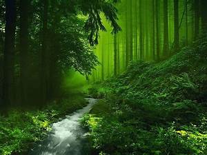 Green, Nature, Deep, Forest, River, Wallpapers, Hd, Desktop, And, Mobile, Backgrounds