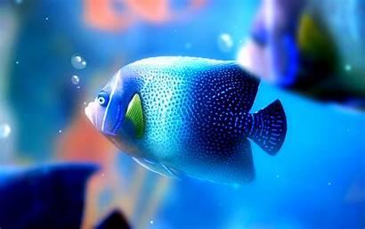 Fish Wallpapers Desktop Peces
