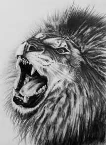 Realistic Lion Drawings Pencil
