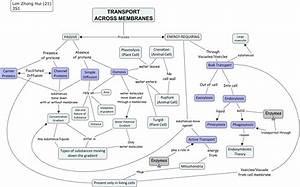 Biology - Transport of substances