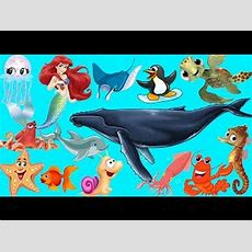 Learn Sea Animals + Water Animals Names And Sounds  Drulii Tv For Kids Youtube