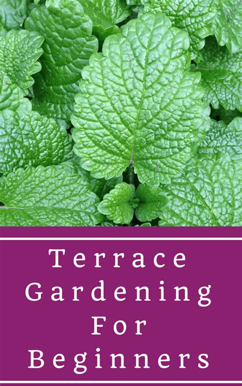 gardening for beginners terrace gardening for beginners the step by step guide