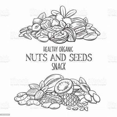 Nuts Seeds Vector Drawn Hand Almond Illustration