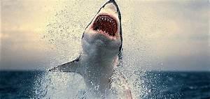 Attaque De Requin   Les Pires Plages Du Monde