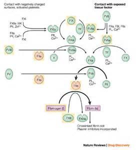 Coagulation Protein Disorders (Blood Coagulation Factor Deficiencies) Coagulation Factors