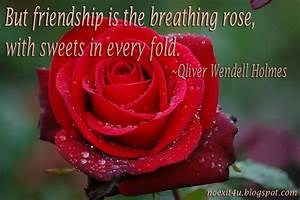 Rose Quotes About Friendship. QuotesGram