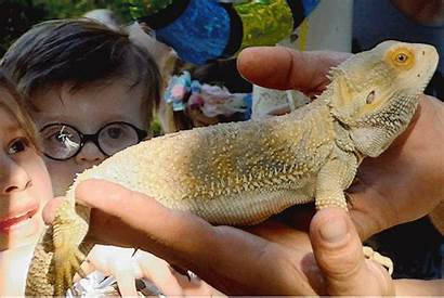 Exotic Critters Tribeca Park Trib Scaly Excitement