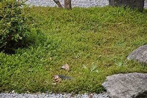 Moos Im Garten : japanischer garten moos garden blog ~ Pilothousefishingboats.com Haus und Dekorationen