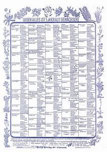 Welche Kräuter Passen Zusammen Tabelle : heilkr uter k chenposter p19 packpapierverlag osnabr ck ~ Frokenaadalensverden.com Haus und Dekorationen