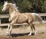 Welche Farbe Passt Zu Dunkelbraun : welche pferderasse passt zu mir ~ Frokenaadalensverden.com Haus und Dekorationen