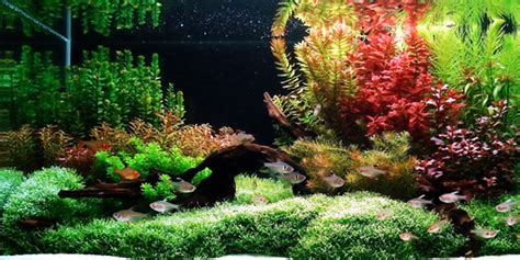 Aquascape Plants by Understanding Aquascaping Style The Aquarium Guide