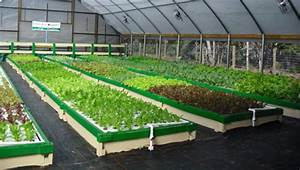 Aquaponics Rafts Faq