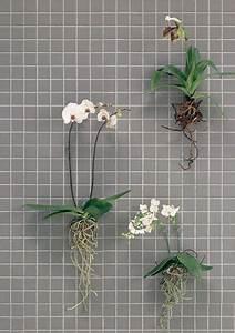 Orchideen Ohne Topf : zimmerpflanzen berraschend inszeniert orchidee pinterest zimmerpflanzen pflanzen und ~ Eleganceandgraceweddings.com Haus und Dekorationen
