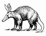 Aardvark Coloring Printable Animals Sheet Animali Savana Gli Della Animalstown Drawings Youfriend Animal sketch template