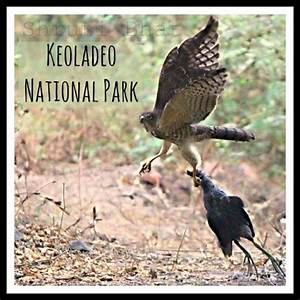 Bharatpur Bird Sanctuary , Keoladeo National Park