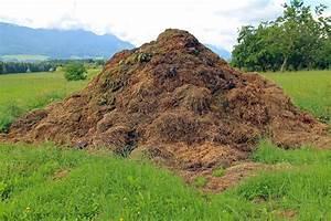 Pilze Auf Komposthaufen : kostenloses foto misthaufen komposthaufen kostenloses ~ Lizthompson.info Haus und Dekorationen