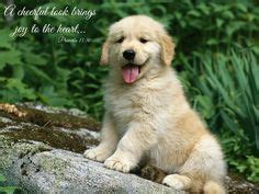 animal pictures  bible verses images