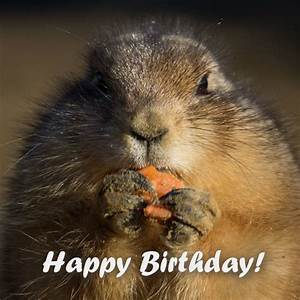 2 Words from Cute Animals: Happy Bday | Cute Birthday Wishes