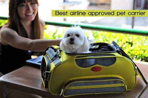 bissell cleanview vacuum reviews 10 best airline approved pet carriers for dogs and cats