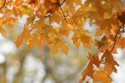 Science Behind Why Trees Lose Their Leaves, Change Color ...