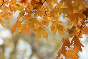 Science, Behind, Why, Trees, Lose, Their, Leaves, Change, Color, During, Fall