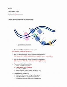 Biology End Of Quarter 3 Quiz Name       Key