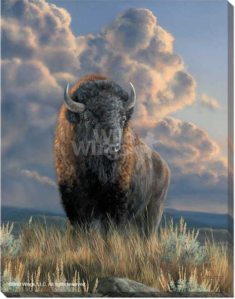 distant thunder wrapped canvas wild wings