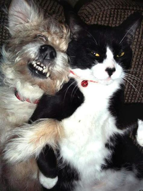 cat dog  friends   adorable lovehate moment