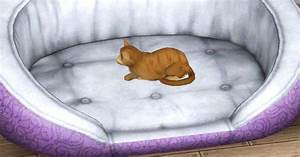 getting familiar with a familiar shay39s sims With non destructive dog bed