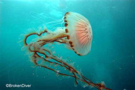 Hurt Animals in Ocean