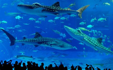 chimelong kingdom shenzhen chine le plus grand aquarium du monde selon le guinness