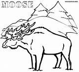Moose Coloring Pages Print Winter Forest Animal Colorings sketch template