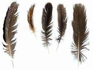 Dove Background Feathers0001 Free Background Texture Feathers Feather