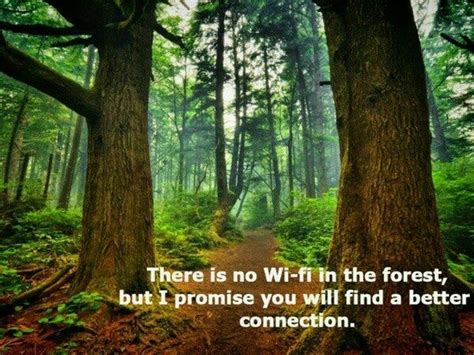 quotes nature promise wi fi forest connection
