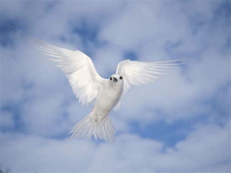 People Peace Doves Vs. Politician War Hawks– Bye Bye