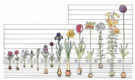 flower bulbs shrubs ornamental grasses groundcover