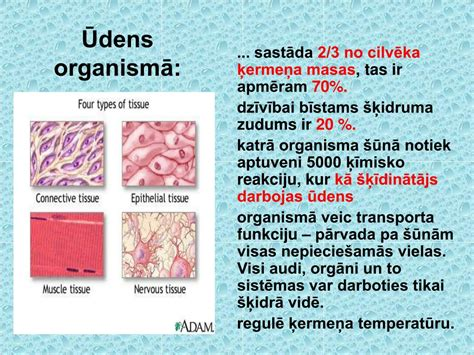 PPT - Ūdens PowerPoint Presentation, free download - ID ...