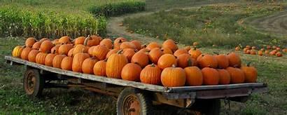 Pumpkin Patch Desktop Autumn Halloween Wallpapers Fall