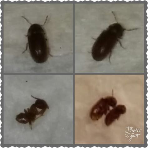 Getting Rid of Bugs in the Kitchen   ThriftyFun