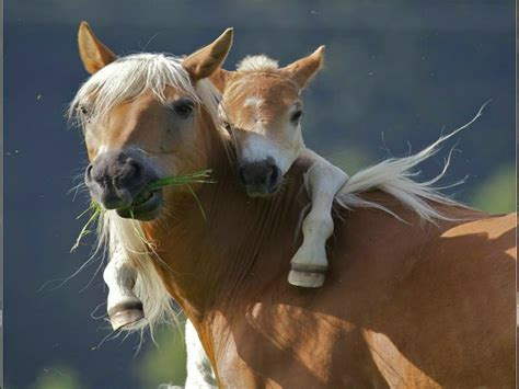 horse horses wallpapers animals wild animal baby cute mom mothers mother babies mommy cuccioli moms choice pony running foal amazing