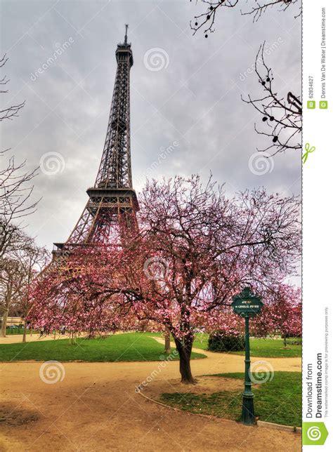 blossom tree eiffel stock photo image