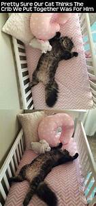 pretty sure our cat thinks the crib we put together was