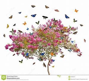Rosa Blühender Baum Im Frühling : schmetterlinge und rosa bl hender baum stockbilder bild ~ Lizthompson.info Haus und Dekorationen
