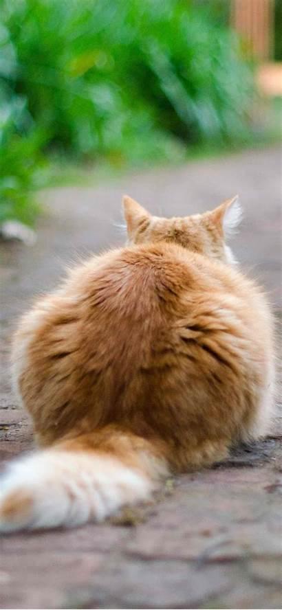 Cute Cat Iphone Backgrounds