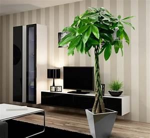 Pflanzen Wohnzimmer Feng Shui : moderne zimmerpflanzen als frische deko f rs zuhause ~ Bigdaddyawards.com Haus und Dekorationen