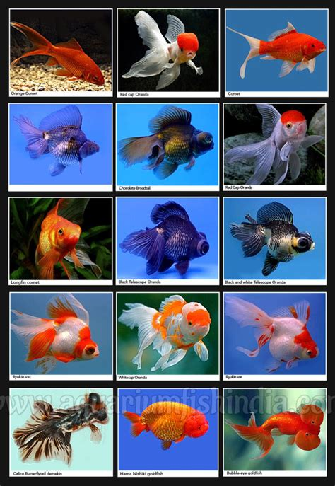 marine aquarium fish identification aquarium design ideas
