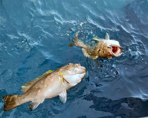 florida deep fishing drop spots grouper south snowy fish caught keys bottom water types maps flfishingspots