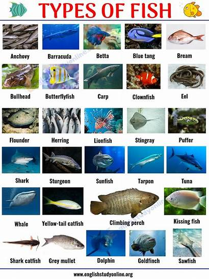 Fish Types Names English Popular Animals Englishstudyonline
